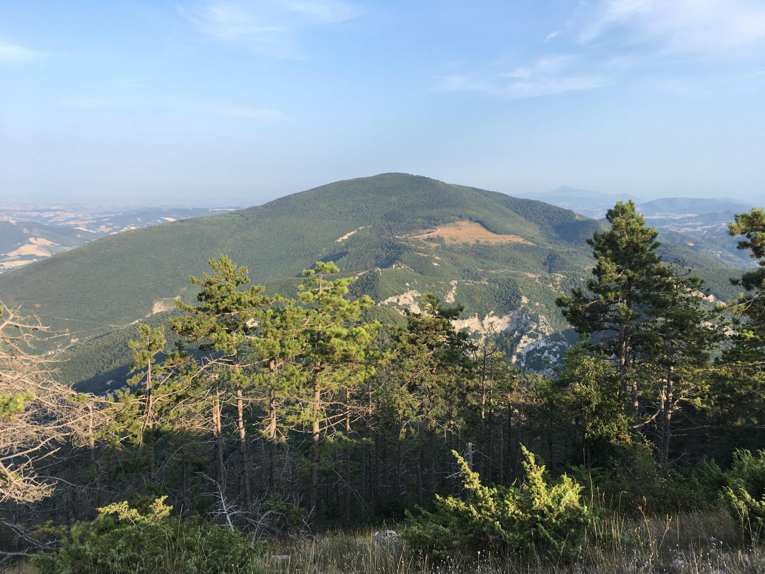 In Vetta_4 (vista Monte Paganuccio - Gola del Furlo)
